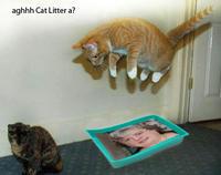 Mary Bale (Woman dumped cat in wheelie bin)