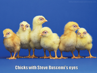 Steve Buscemeyes