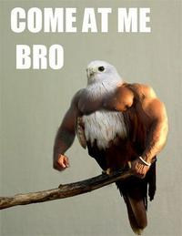 Birds with Arms
