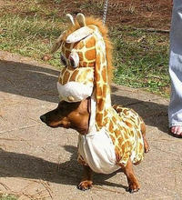 Man-Giraffe-Dog