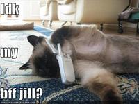 IDK My BFF Jill