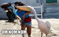 Uncle Ray/Pedo Pelican/Greedy Heron