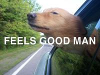 Feels Good Man / Pepe The Frog