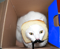 Cat Breading