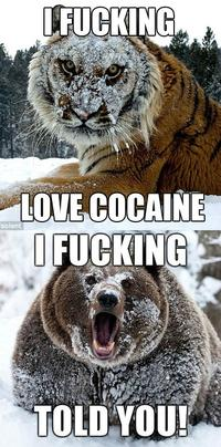 I Fucking Love Cocaine / Cocaine Bear