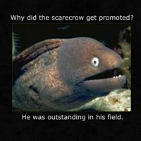 Bad Joke Eel