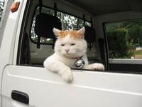 Shironeko / Basket Cat