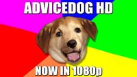 Advice Dog