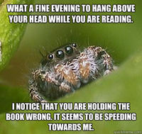 Misunderstood Spider