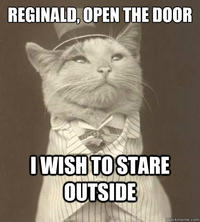 c99 aristocat image gallery (sorted by comments) know your meme