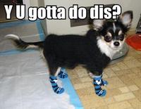 Y U Do Dis?
