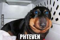Phteven / Tuna the Chiweenie