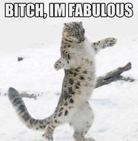 Bitch I'm Fabulous
