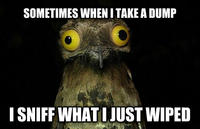 Weird Stuff I Do Potoo