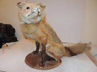 Crappy Taxidermy