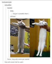 a78 longcat know your meme