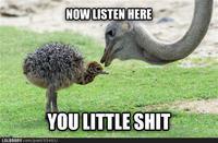 Listen Here You Little Shit