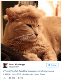 4e5 trump your cat image gallery know your meme