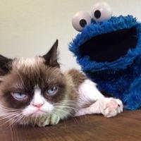 grumpy cat новый год