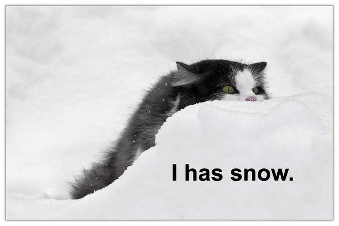 cat-i-has-snow.jpg