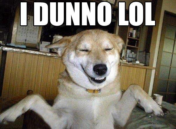 yes dog meme - photo #36
