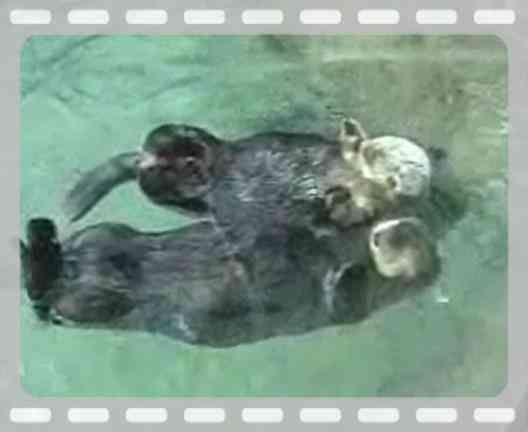 th_OttersHoldingHands.jpg