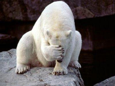 polar-bear-face-palm_thumbnail.jpg