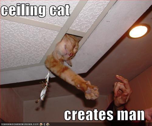 Ceeiling_Cat.JPG