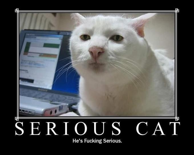 serouscat.jpg