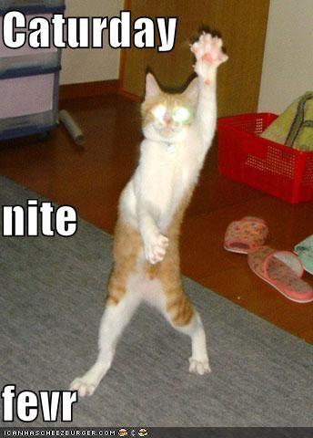 funny-pictures-caturday-night-fever-dancing-cat.jpg