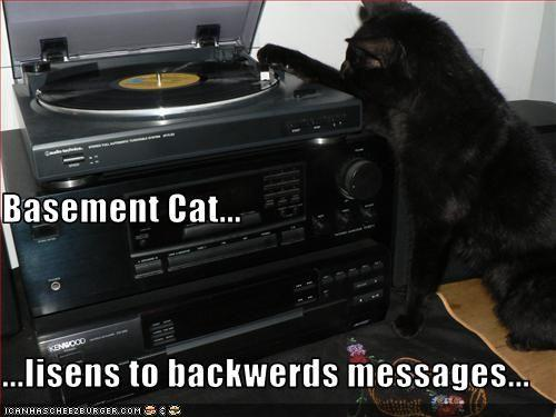funny-pictures-basement-cat-listens-to-backwards-messages.jpg