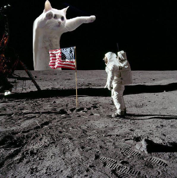 Longcat_Moonlanding.jpg