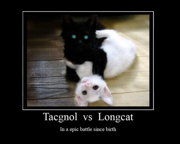 Long Cat Meme