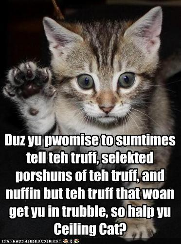 funny-pictures-kitten-takes-an-oath.jpg