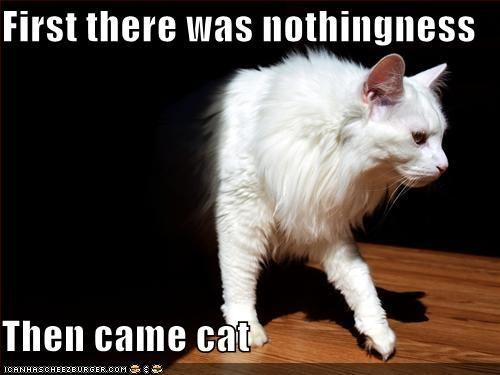 funny-pictures-cat-comes-out-of-nothingness.jpg
