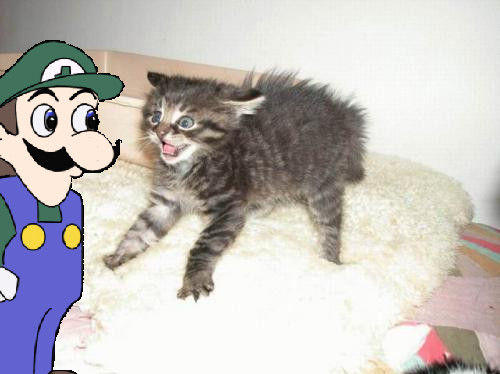 Weegee_And___WTF_Cat___by_1Dimentiosuperfan1.jpg