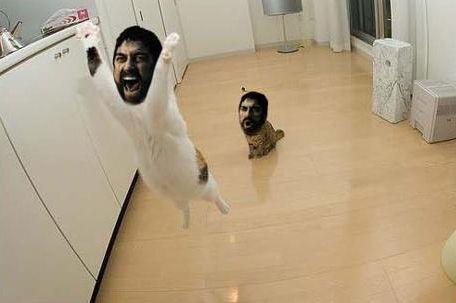 SPARTAcats.jpg