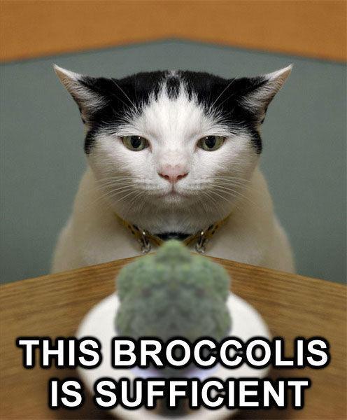 Broccoli_cat.jpg