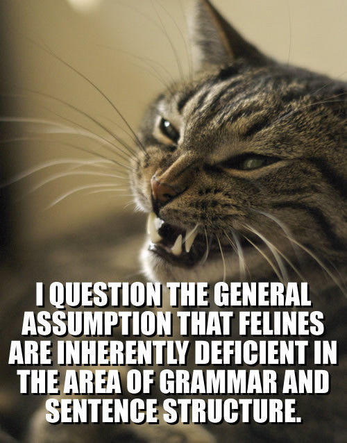 lolcat-i-question-the-general-assumption-that-feli1.jpg