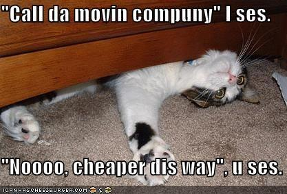 funny-pictures-cat-furniture.jpg
