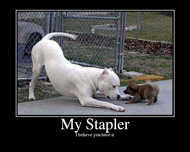 MyStapler image 12693] i believe you have my stapler know your meme