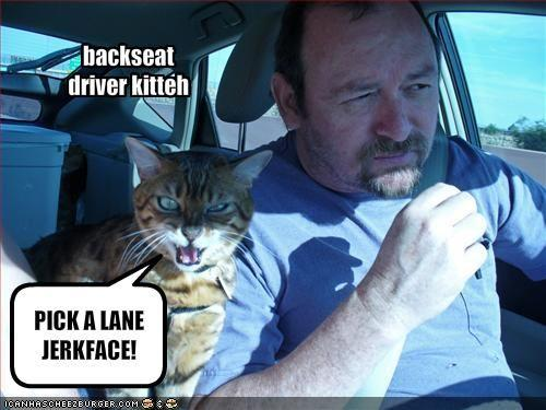 funny-pictures-your-cat-is-a-backseat-driver.jpg