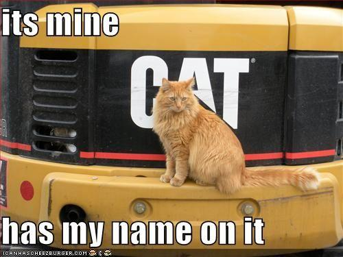 funny-pictures-your-cat-owns-a-large-truck.jpg