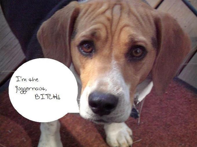 The_Juggernaut_Beagle_by_newXageXcinderella.jpg