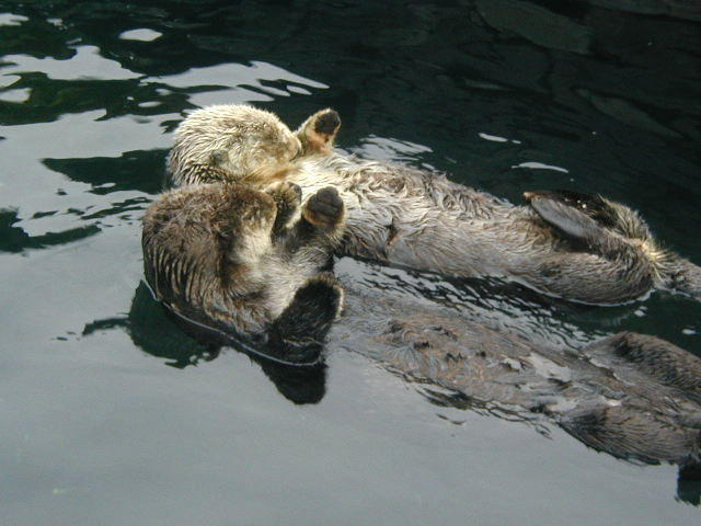Otters_at_the_Vancouver_Aq__by_AllyciaM.jpg