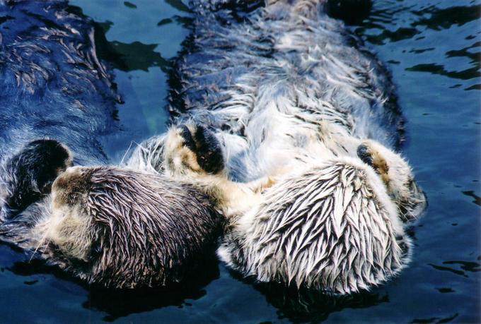 otter_lovers.jpg