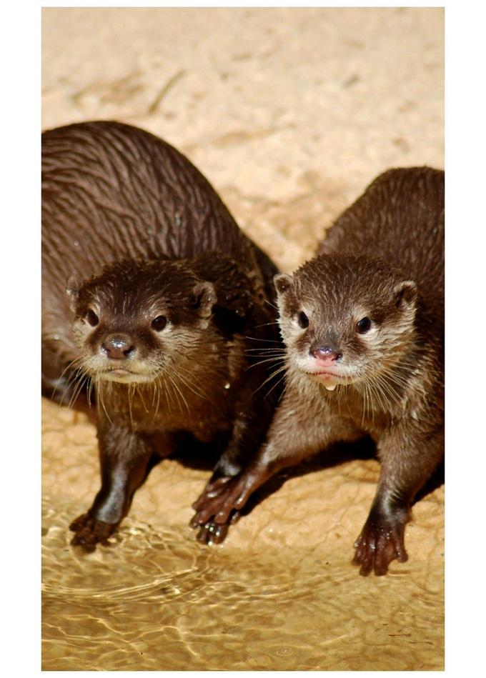 Mr__and_Mrs__Otters_____by_arielo.jpg