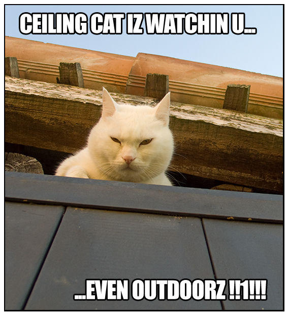Spilla_Ceiling_Cat_by_dolma33.jpg
