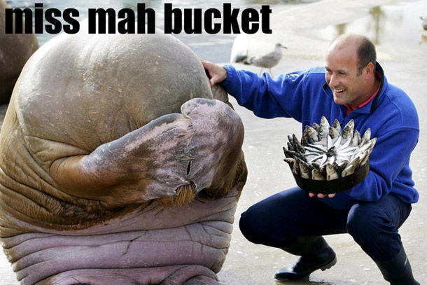 03-miss-mah-bucket.jpg
