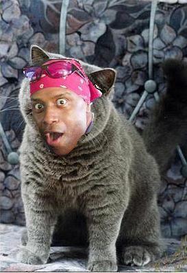 HappyCat image 22761] happy negro know your meme,Cat Negro Meme